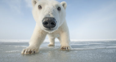 NATURE SNOWBOUND: ANIMALS OF WINTER